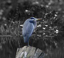 Blue Heron on Stump by DaveBuse