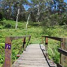 Bridge on the Charles Darwin Walk to Wentworth Falls by Catherine Davis