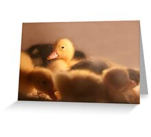BUT THE ONE LITTLE DUCK Greeting Card