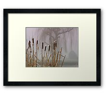 Cat-tails and fog Framed Print