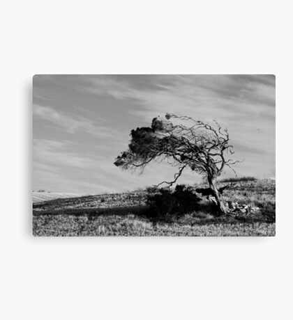 Wind Sculpture Canvas Print