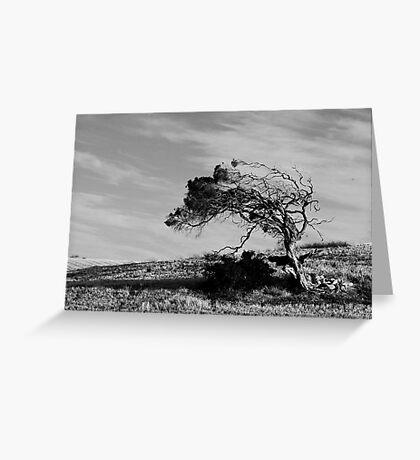 Wind Sculpture Greeting Card