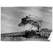 Wind Sculpture Poster