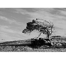 Wind Sculpture Photographic Print