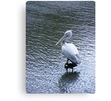 A marvellous bird is the pelican.... Canvas Print