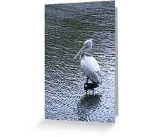 A marvellous bird is the pelican.... Greeting Card