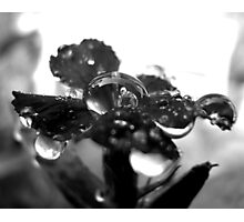 Drink In Black & White II Photographic Print
