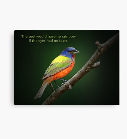 The soul would have no rainbow . . . Canvas Print
