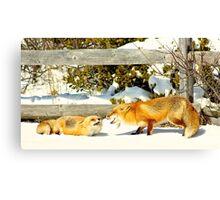 Laughing Fox Canvas Print