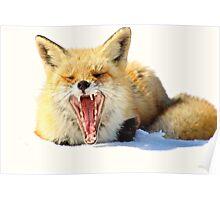 Yawning Fox Poster