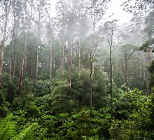 Rainforest and Mist by Michelle McConnell