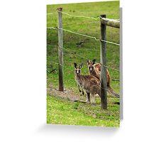 Kangaroos at Pambula Beach Greeting Card