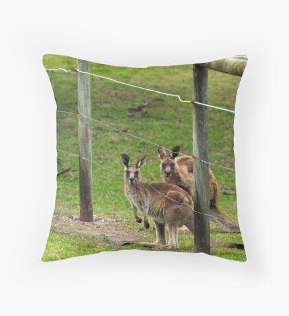 Kangaroos at Pambula Beach Throw Pillow