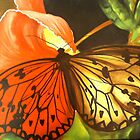BUTTERFLY IN CENTRAL PARK by Ehivar Flores Herrera