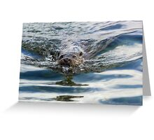 Otter swimming Greeting Card