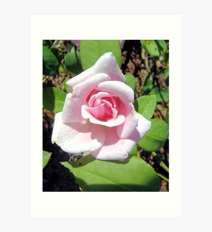 Kiss of a Rose Art Print