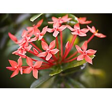 Seychelles flowers Photographic Print