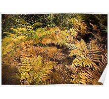 Autumnal Ferns Poster