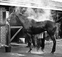 Steamy Horse by Samantha Coe