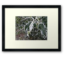 Frosted Holly Framed Print