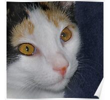 Lilly The Kitty Poster