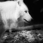 White Wolf B&W by Ian Phares