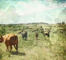 CountryLife by dmcart