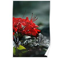 Red in Bunches Poster
