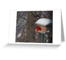 First Cardinal of the Year!! Greeting Card