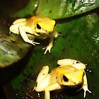 Yellow Frogs by Donna Chapman