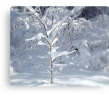 Delicate Delight  ^ Canvas Print