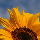 Sunflower by Jeremy Owen