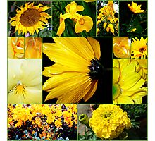 Cool - Yellows and Greens Photographic Print