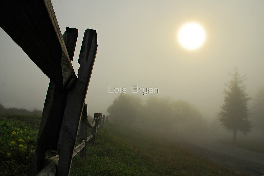 Foggy Country Road by Lois  Bryan