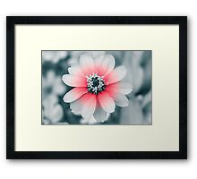 Fade of red Framed Print