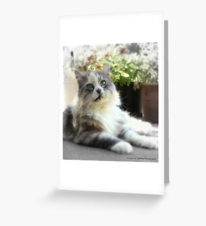 Its a cat's life Greeting Card