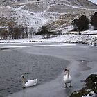 Swans on Dunsapie Loch by Linda More