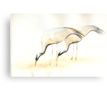 Love Birds Canvas Print