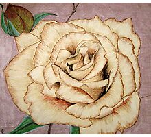 Brandy Rose Photographic Print