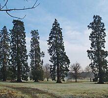 Cedars by WatscapePhoto