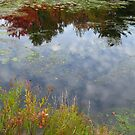 Puffs of Cotton on the Pond by Rebecca Bryson