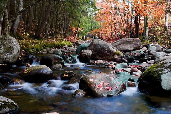Splendid Brook by Jeff Palm Photography