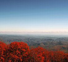autumn zen by Alexandr Grichenko
