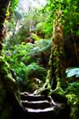 Rainforest Steps by Evita