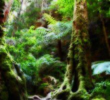 Rainforest Steps by Evita
