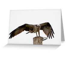 An Osprey on a pole with a live fish Greeting Card