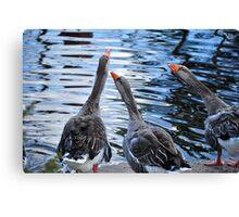 Gossiping Canvas Print