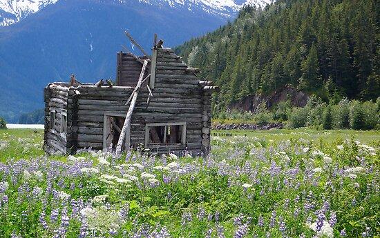 Abandoned cabin at Alice Arm by Istvan Hernadi