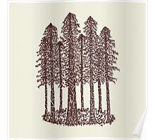 Cathedral Grove (Coastal Redwoods) Poster