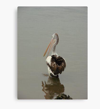 Talking Pelican Canvas Print